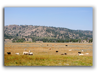 Ranch for Sale In Wyoming 4