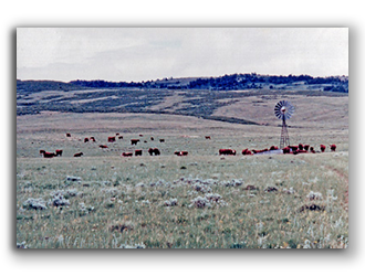 Wyoming-cattle-ranch-for-sale