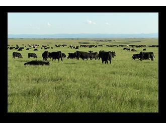 ranch for sale in south dakota