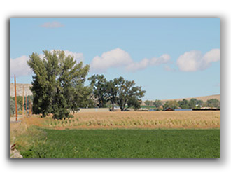 Bryant-Farm