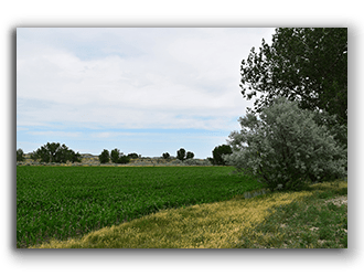 Ranches Property For Sale in Montana Miles City