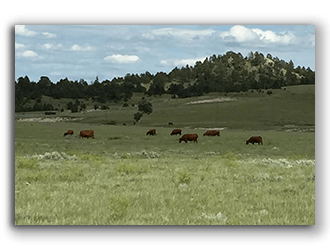 Well Watered Land for Sale in Lusk Wyoming