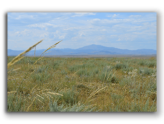 Wyoming Pastures for Sale