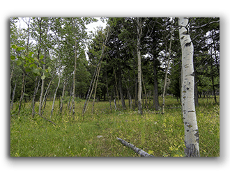 Ranches for Sale in MT