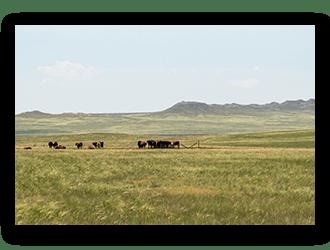 Cattle Ranch for Sale in NE