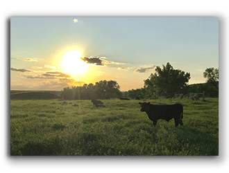 Ranches for Sale in North Dakota